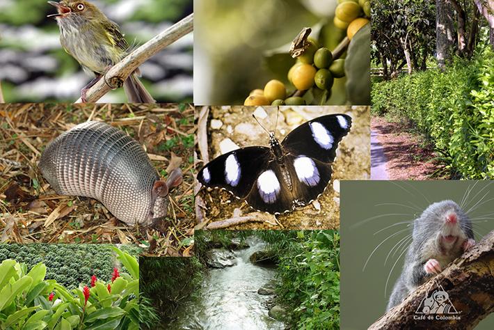 콜롬비아, 생물다양성의 파라다이스