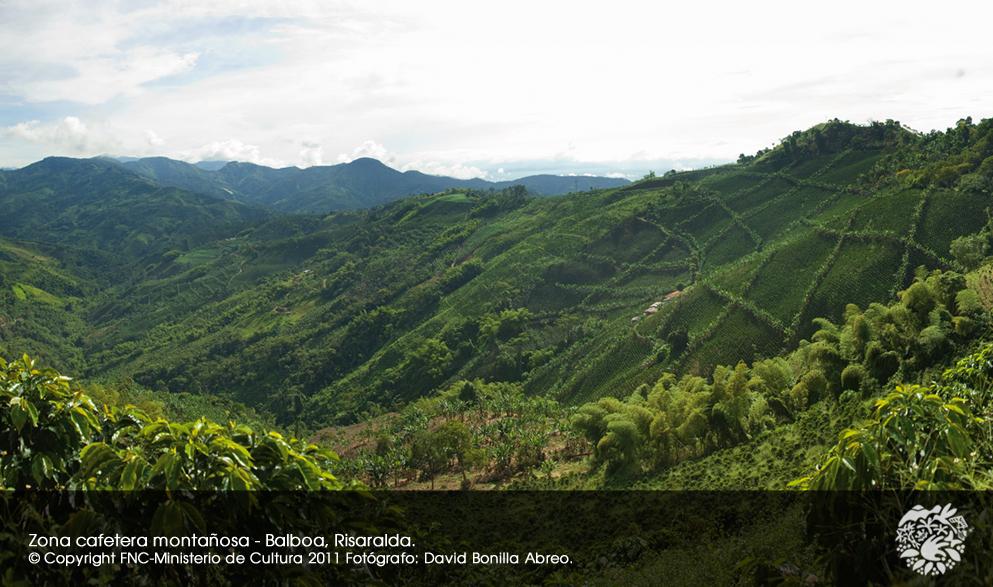 세계문화유산지역의 사면에 있는 커피밭